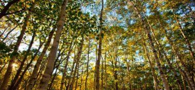 Apple koupil velký les na dřevo, z kterého hodlá vyrábět obaly